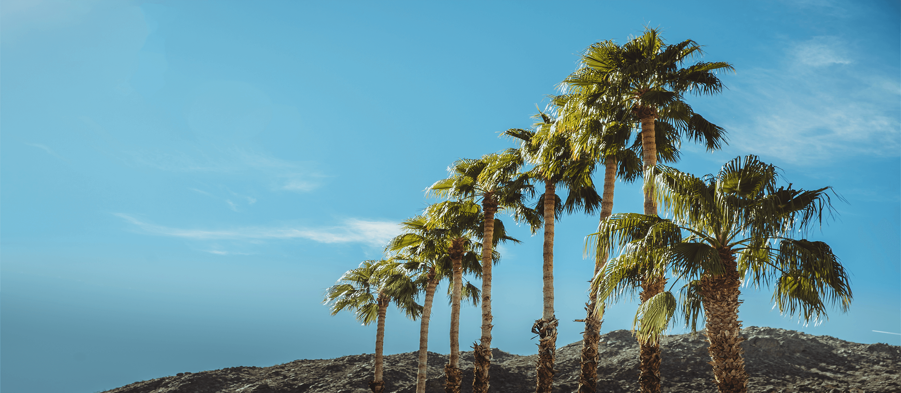 Image of group of palm trees with blue sky
