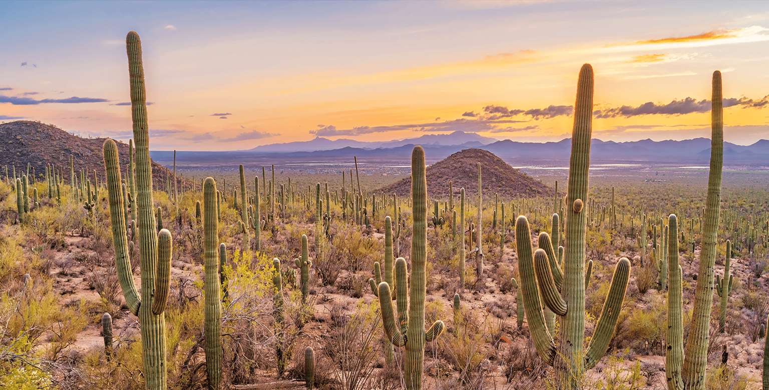 Image of desert sunset scene with cactus and mountains