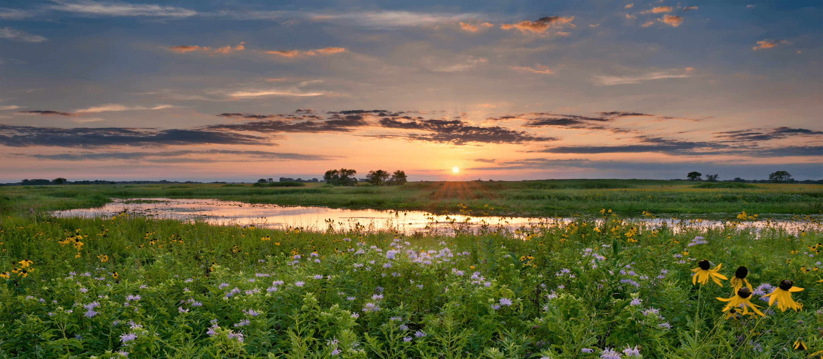 Image of a stream surrounded by flowers at sunset