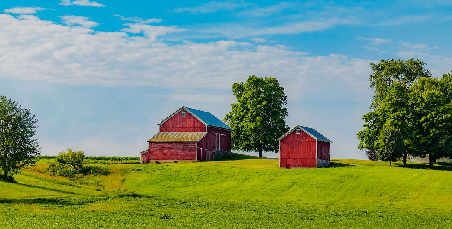 Image of two red barns in a meadow surrounded by trees and blue sky