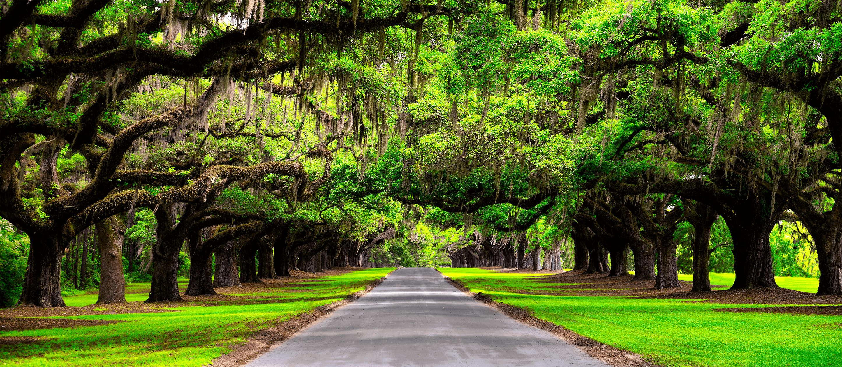 Image of lush tree-lined road stretching to the horizon