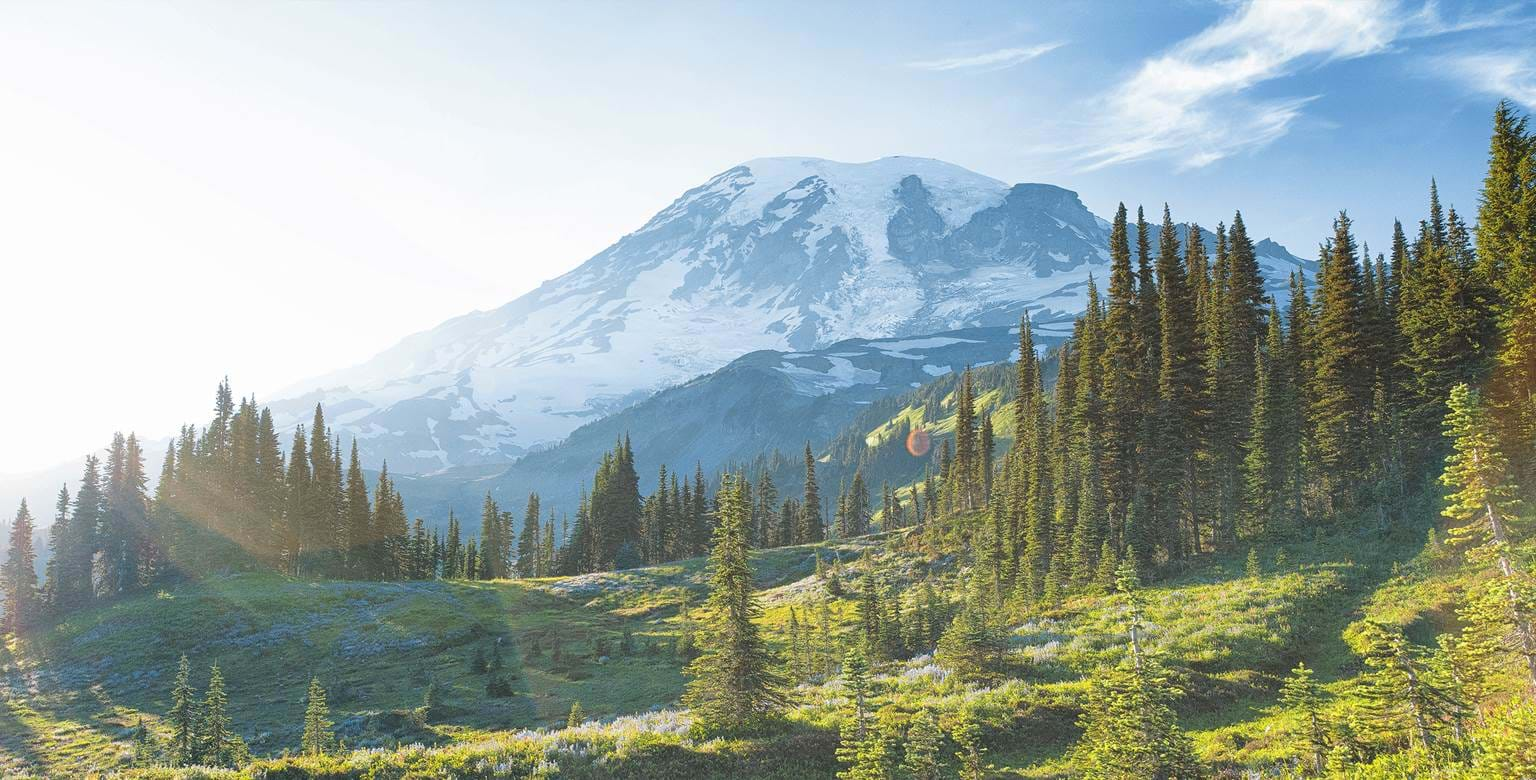Mount Rainier  with pine trees